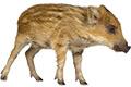 inzerce-divoka-zver