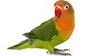 inzerce-ptaci-papousci