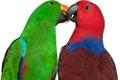 papousci