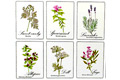 sbirky-rostlin