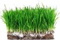 travniky-traviny